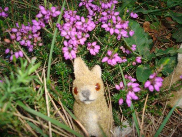 """""""Les petites curieuses   .....    Lucie et les petits lapins """"     1er article"""
