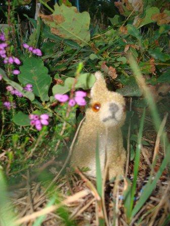 """""""Les petites curieuses ......   Lucie et les petits lapins """"   2ème article"""