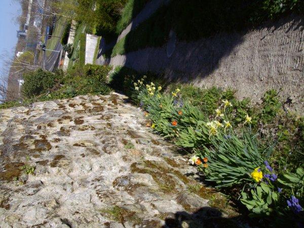 Les fleurs autour de la cave sont fleurie.