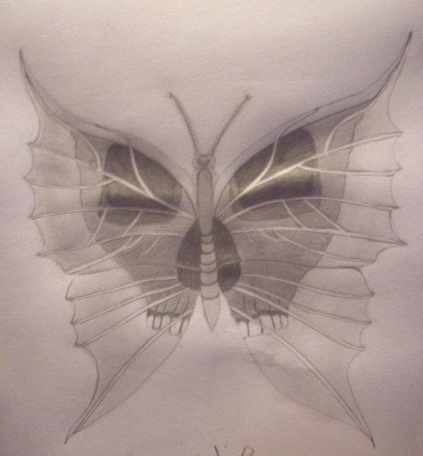 dessin tête de mort-papillon