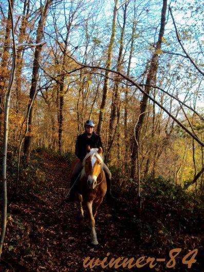 """""""J'ai vu parfois , dans le regard du cheval la bauté inhumain d'un monde d'avant le passage des hommes """" Bartabas"""