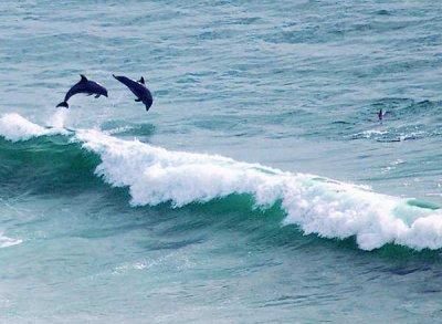 Vive le surf....