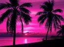 Photo de Pink-Paradise