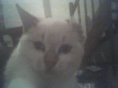 c mon chat