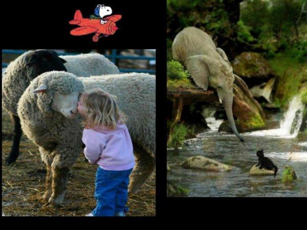 Quelques images d'animaux !