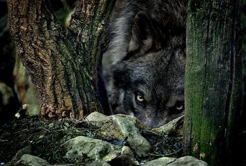 Il se cache .