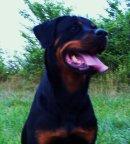 Photo de Xena-la-Rottweiler