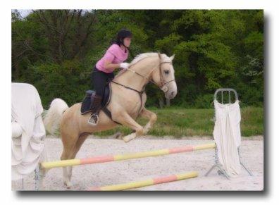 Résumé de l'acquisition de mes chevaux