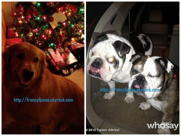 Tucker Albrizzi love Frankie Jonas's dogs