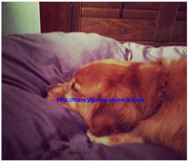 Twitter- Elvis is on Frankie's bed