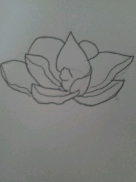 Une fleur de Magnolia