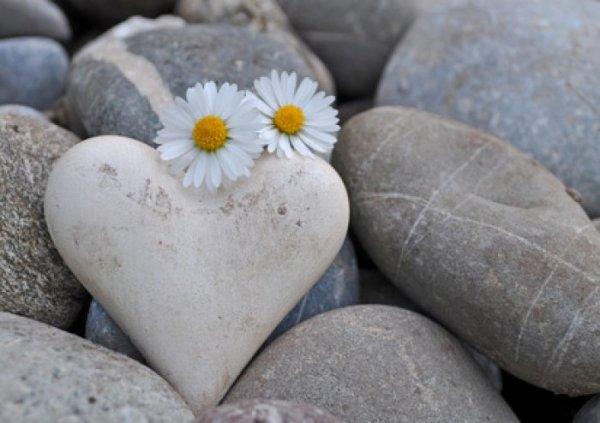 Chapitre 12 : Tendre comme la rose, dure comme la pierre