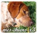 Photo de mes-chiens-x3