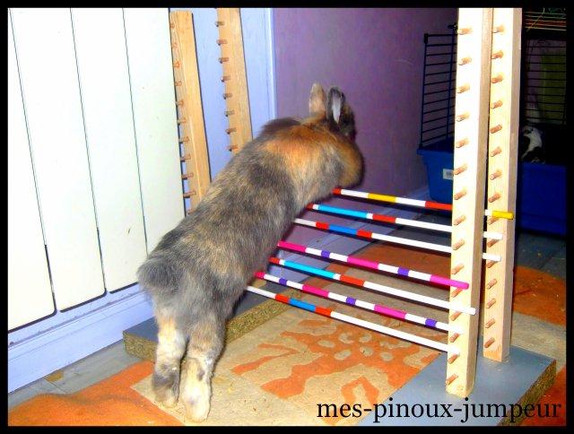 ° ~ დ Rentre dans l'univers du kaninhop, où des lapins s'y donne à coeur joie დ ~ °