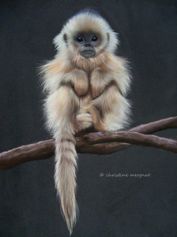 Articles de kiksdur2 tagg s petit singe blog de kiksdur2 - Petit singe rigolo ...