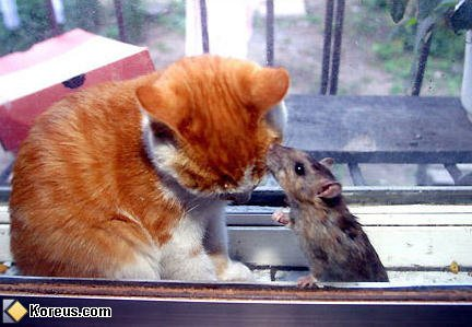 qu'est ce que tu dit le rat chat alors