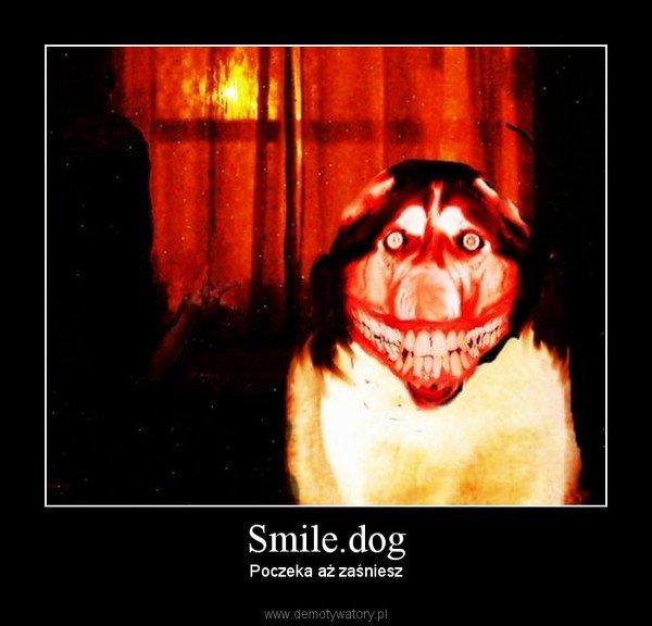 Smile.jpg / Smile.dog