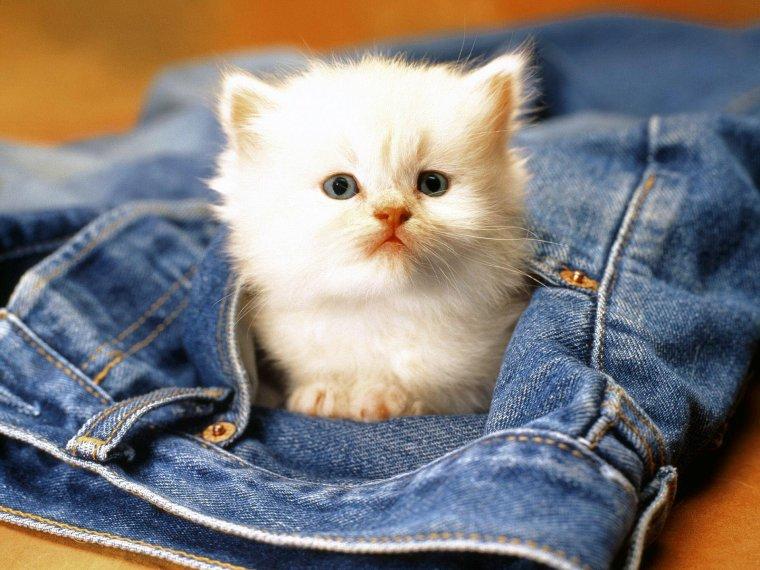 Chaton en poche