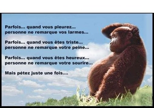 Humour et citations