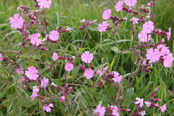 quelques fleurs pour l'eclat des couleurs ( fleurs prises dans la nature)
