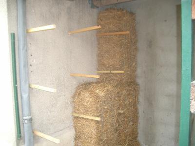 Essai sur une surface de 4 m2 à l'intérieur de l'abri bois.