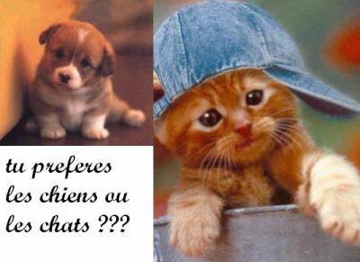 tu préfére les chiens ou les chats ?