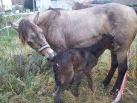 naissance Aynaya
