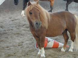 Mustang >> Son histoire