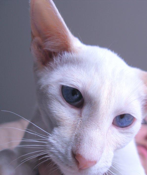 -LES ARTICLES ACTUELLES VOUS POUVEZ TROUVER A LA FIN DU BLOG!! -les primiers deux articles sont,pour presenter tout mes chats,qui restez chez moi,et apre le blog commence par chronologie.
