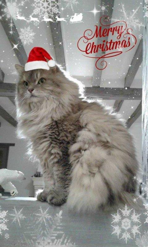Calendrier de l'Avent 2016 - Jour de Noël