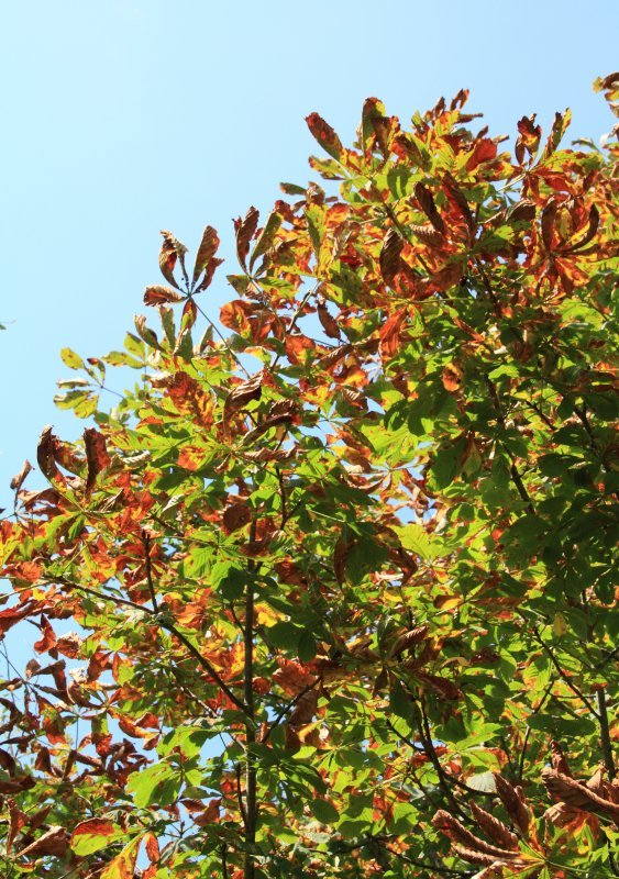 L'automne approche......