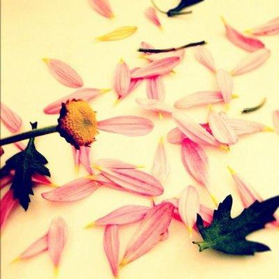 Jelena : Scandale ... A cause d'une fleur sans pétales !