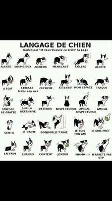 language des chiens