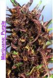 Photo de Marijuana-Weed