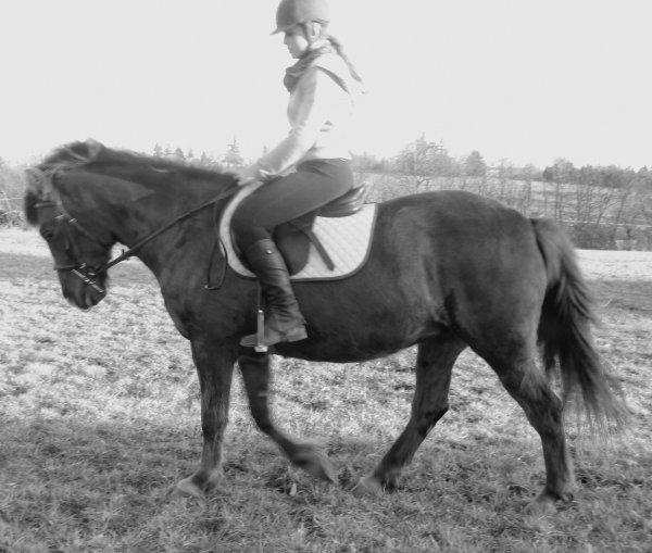 """"""" Tous les chevaux sont merveilleux, sauf le nôtre, qui lui est exceptionnel ... """""""