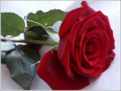Une Belle Fleur Rouge Map Titecampagne