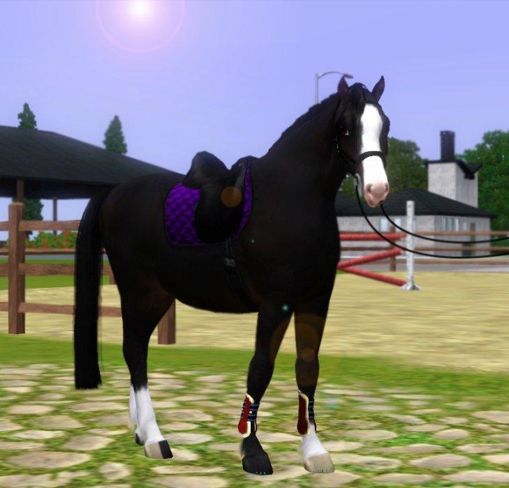 Blog du Newport Equestrian Estates