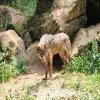loups-louves-44