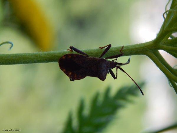 petites insectes