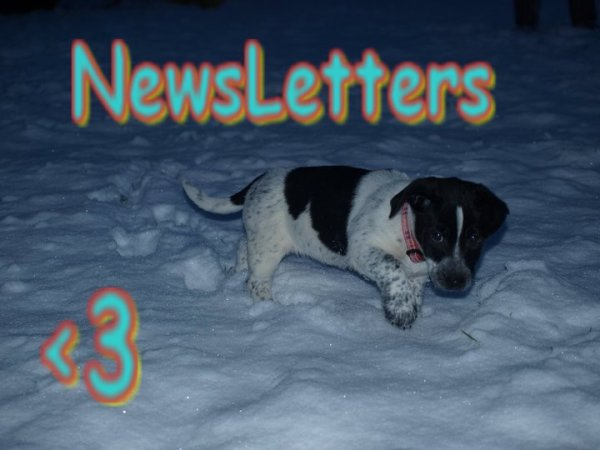 Artiicle #3# NewsLetters