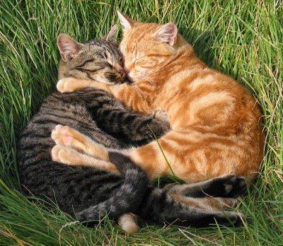 chat amoureux