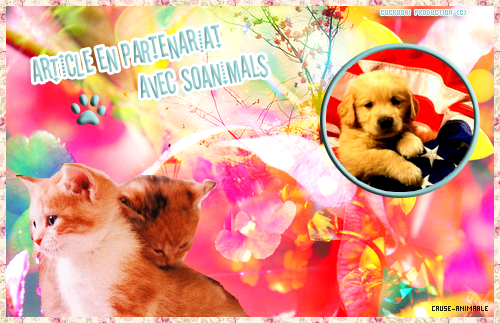 Article en Partenariat avec SoAnimals