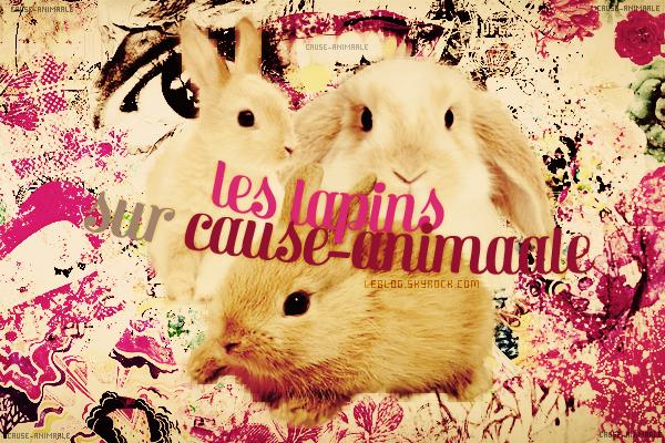 Le Lapin ♥.