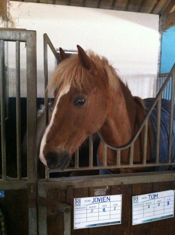 Jovien mn amour dun poney