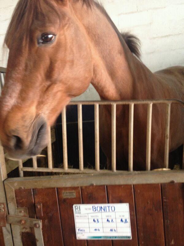 Mn amour le plus beau des chevaux mon roi Bonito