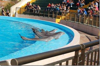 Ce que vous devez savoir avant de vous rendre dans un delphinarium :