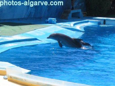 La Complainte du dauphin