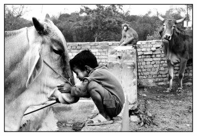 SUPPLIQUE POUR L'ANIMAL ET POUR L'HUMAIN