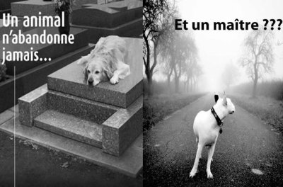 """A lire et à méditer avant toute adoption d'un chien ou d'un chat... : """"LE JOURNAL D'UN CHIEN"""""""