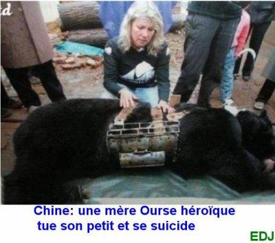 UNE MERE OURS HEROIQUE TUE SON PETIT ET SE SUICIDE